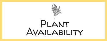 Nursery plants availability